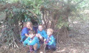 Beaver-shelter